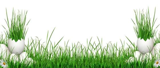 Fond herbes et oeufs detourés.