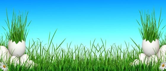 Fond verdure et ciel bleu.