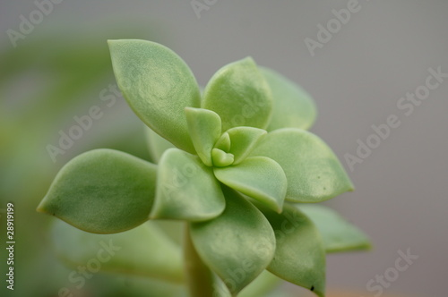 kaktus pflanze stockfotos und lizenzfreie bilder auf bild 28919199. Black Bedroom Furniture Sets. Home Design Ideas