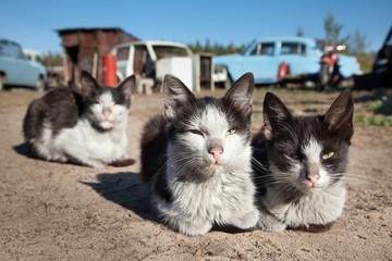 Бездомные коты отдыхают