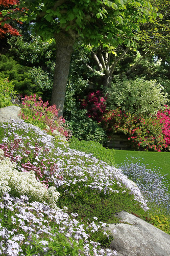 Keuken foto achterwand Azalea Beautiful rock garden in spring, also available in horizontal.