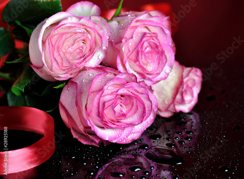pink roses on dark background