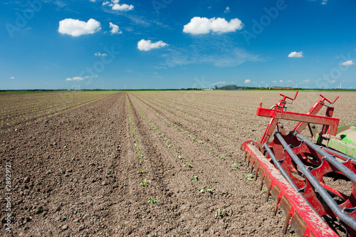 Fields with young vegetable plants