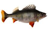 Fototapete Fishing - Essen - Andere