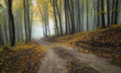 road through a misty forest with beautiful colors in autumn