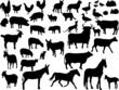 farm animals collection - vector