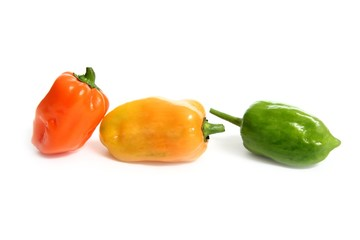Habanero Capsicum chili hottest pepper in the world from Mexico