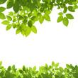 Green Leaves Border on white background