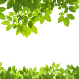 Fototapety Green Leaves Border on white background