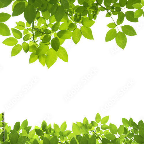Green Leaves Border on white background