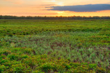 floodplain meadows at sunset