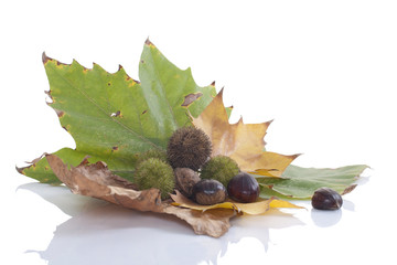 autumn leaves and chestnuts
