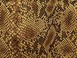 Snake skin pattern by Sergej Razvodovskij - Стоковая фотография.
