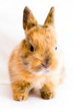 süßes Kaninchenbaby