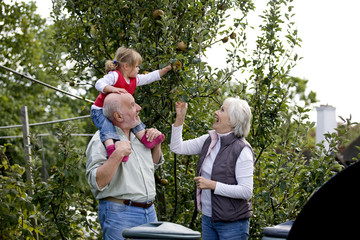 Grandparents and their granddaughter picking apples together