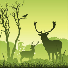 Male Stag Deer on a Meadow with Trees and Bird