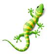 Gecko - 28989170