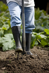 A male gardener digging on an allotment