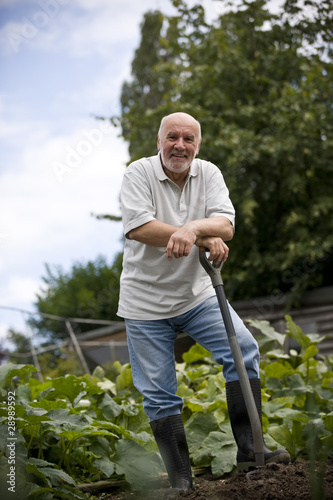 A senior man leaning on a fork on an allotment