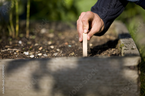A man putting a plant label into the soil on an allotment