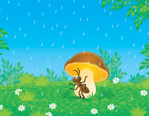 Ant sits under a mushroom in rain