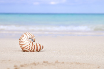 nautilus shell on beach  and blue tropical sea