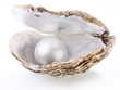 Image of a white pearl in a shell on a white background. - 29023718