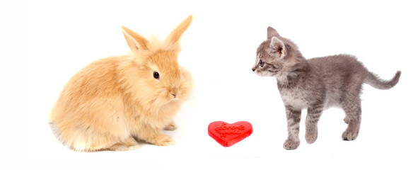 valentine heart and pussy cat and rabbit