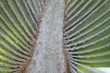 palmstruktur 2