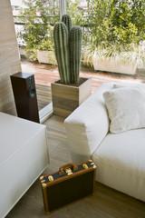 valigia diplomatica vicino al divano e ad un vaso di cactus