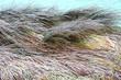 inverno paesaggio 1502