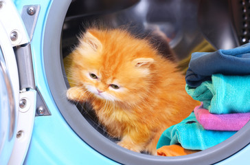 Red kitten in open washing machine.