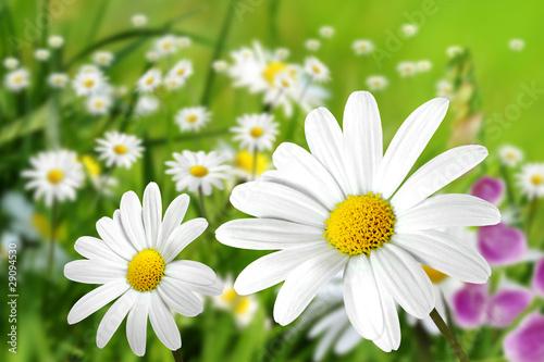 Blumen 199