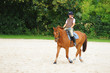 Pferde 28.2