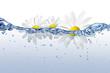 Wasser 41