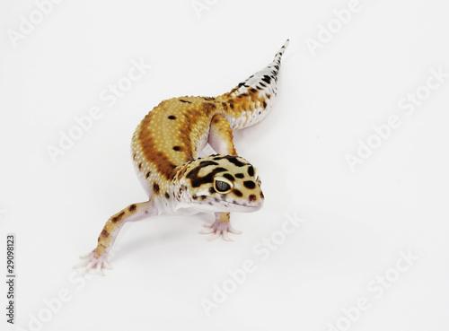 Deurstickers Luipaard leopard jecko