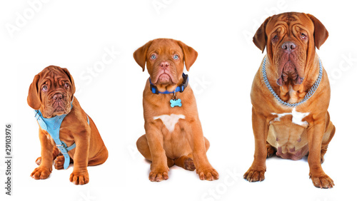 Papiers peints Porter Group of the dogs wearing different dog's accessories