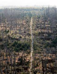 Toter und nachwachsender Wald