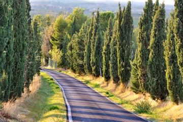 Viale alberato di cipressi