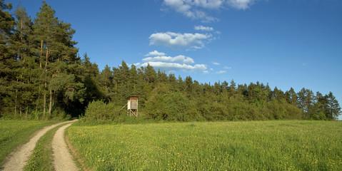 Naturpanorama Waldweg
