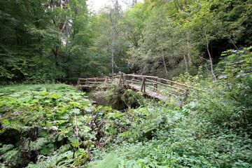 old bridge in the black forest