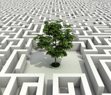 Fototapety single tree lost in endless labyrinth -ecology 3d concept