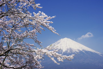 Mt.Fuji with Cherry Blossoms