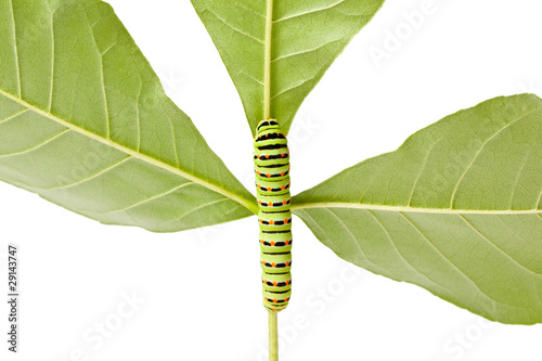caterpillar climbing on twig