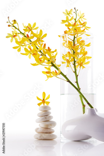 yellow orchid bunchs
