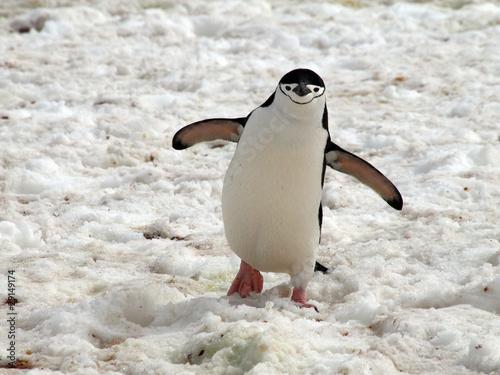 Papiers peints Pingouin Penguin