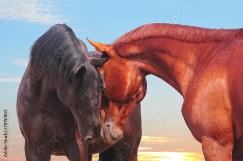 the two communicating horses with sunset skies behind