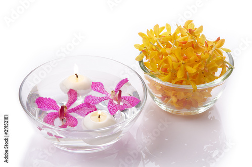 purple and yellow orchid head with candle
