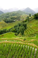 Sapa Highlands Rice Paddy