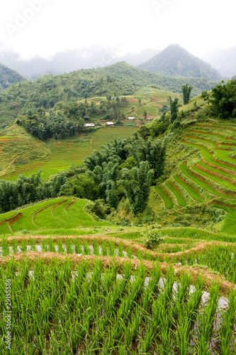 Sapa Highlands Rice Paddy